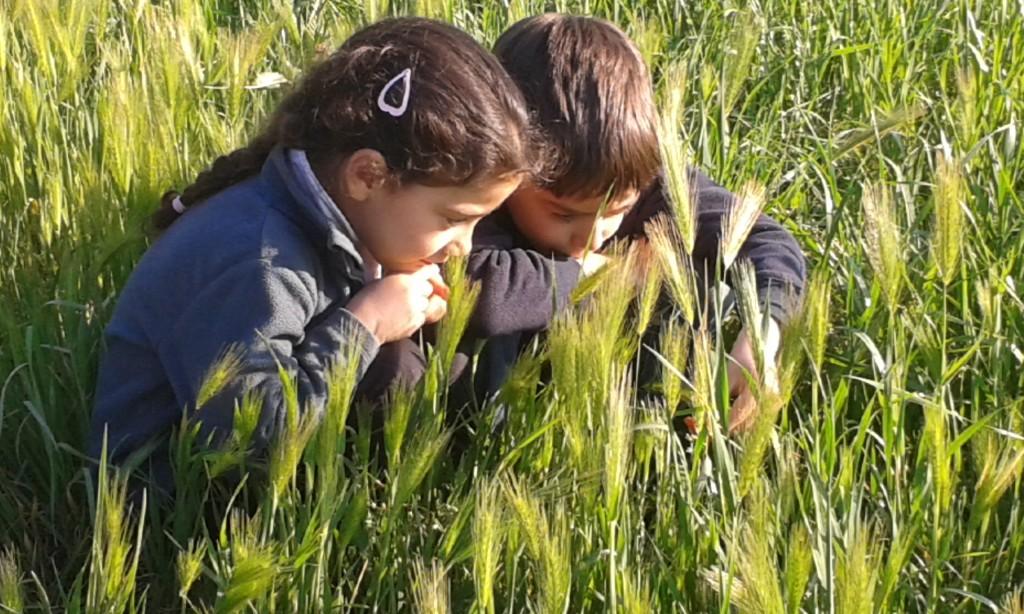 Niños exploradores observando la naturaleza