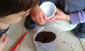 Plantando una semilla
