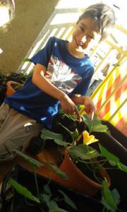 Calabacines en flor