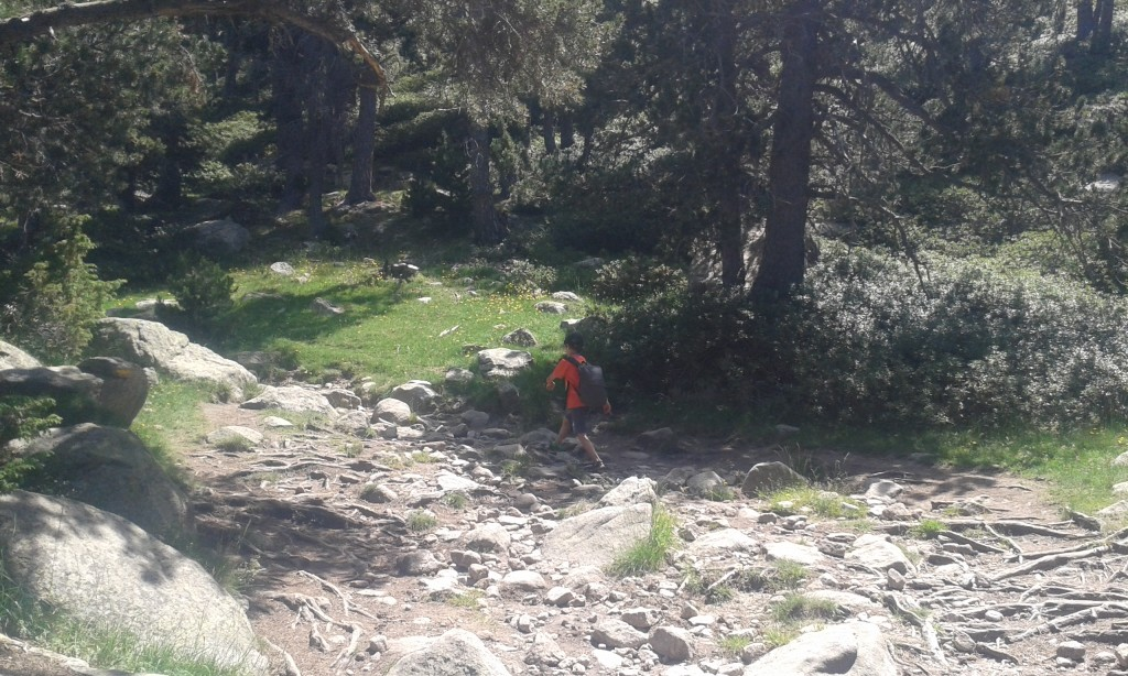 Caminando entre la naturaleza