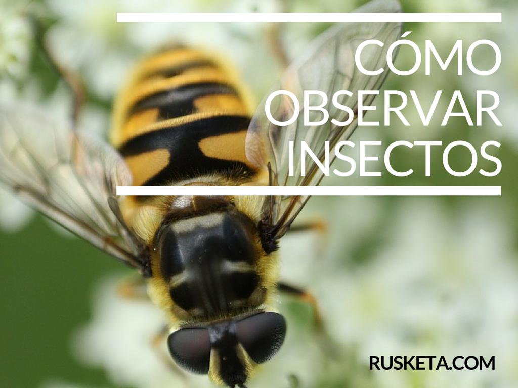 Cómo observar insectos