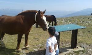 Un caballo en plena naturaleza
