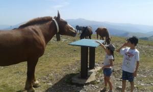 Un caballo en libertad