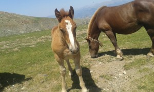 Pequeño caballo en libertad