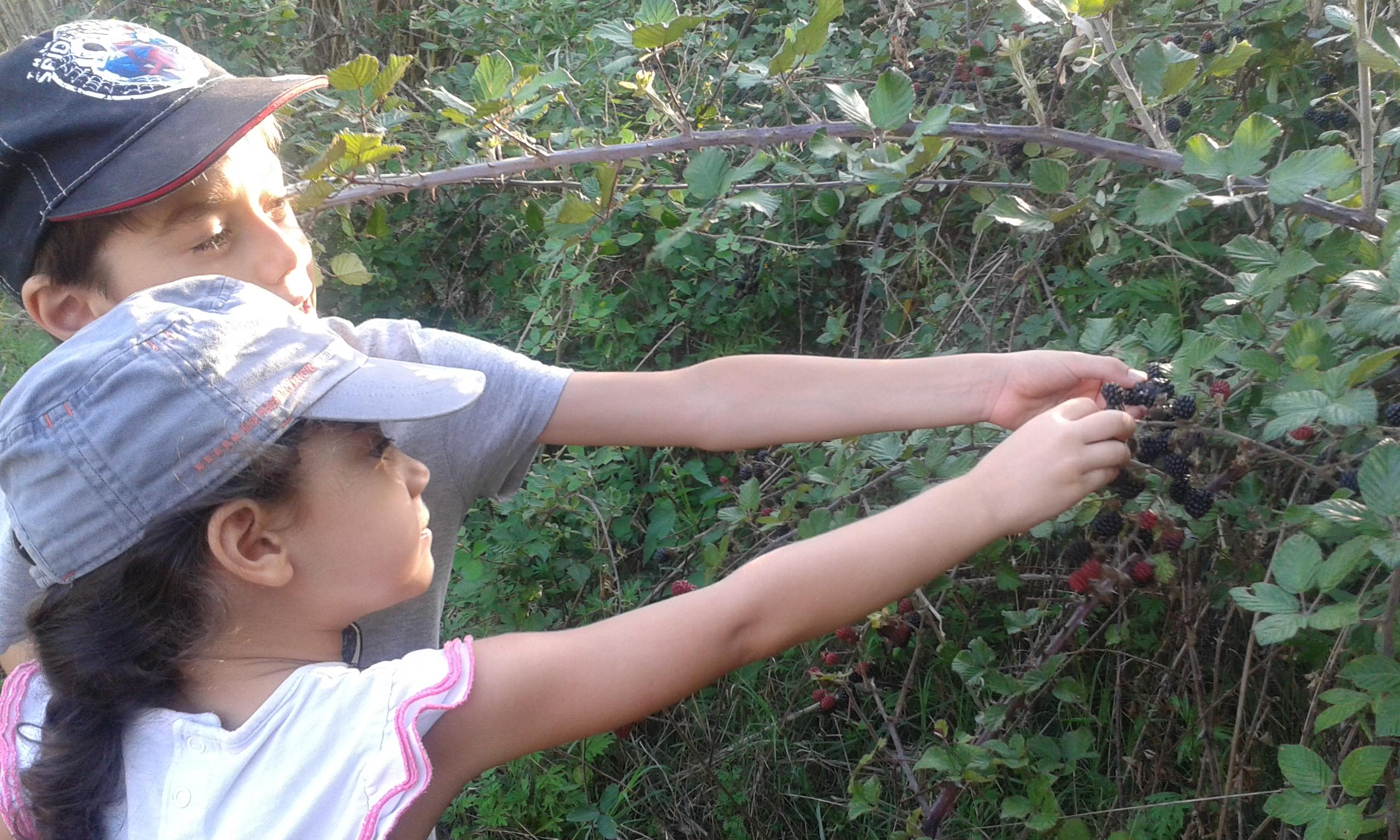 Niños recolectando moras silvestres