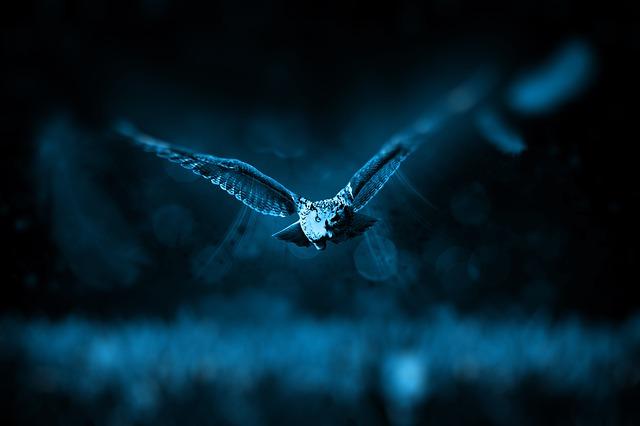 El vuelo nocturno del búho