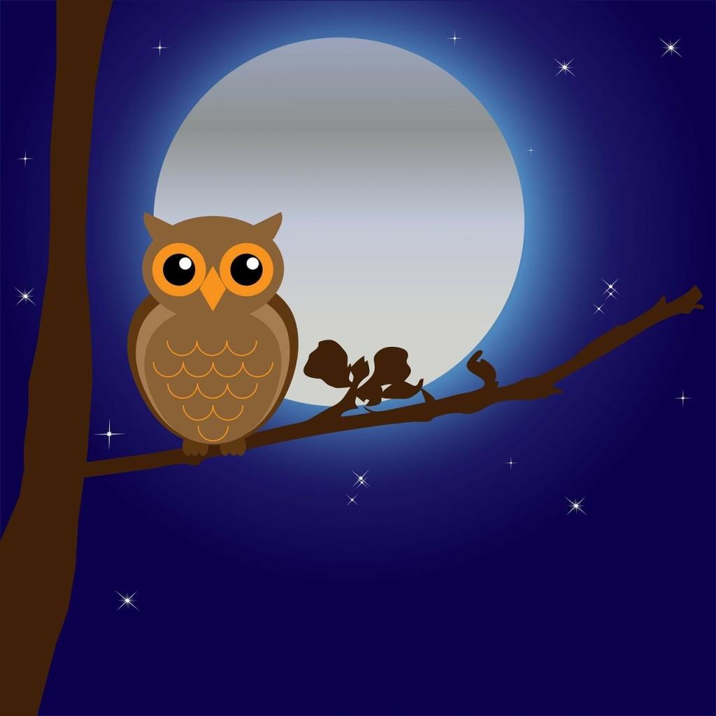 La luna y los animales nocturnos