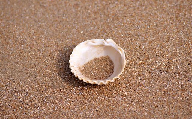 La soledad, representada por una concha sola en la arena
